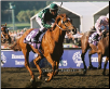 2008 Breeders' Cup 14 Photo Set 8x10
