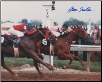 "Affirmed 1978 Preakness Stakes #401 11 ""x 14""  Signed"