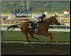 Affirmed 1979 Santa Anita Handicap 8x10 Signed
