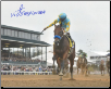 American Pharoah 2015 Breeders' Cup Classic Remote Photo Signed 8×10