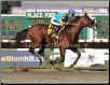 American Pharoah 2015 Haskell Invitational