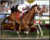 Big Brown 2008 Preakness Stakes Finish