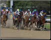 California Chrome 2014 Kentucky Derby Final Turn Photo