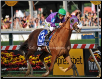 California Chrome 2014 Preakness Finish 1