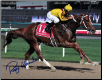Curlin 2008 Dubai World Cup Photograph 8x10 Signed