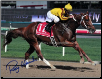 Curlin Dubai World Cup 11x14 Signed