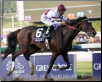 Royal Delta 2012 Breeders Cup Ladies Classic #1
