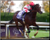 Songbird Breeders' Cup Juvenile Fillies Signed