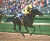 Sunday Silence 1989 Kentucky Derby Loose 8x10 Signed
