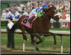 Barbaro Kentucky Derby Finish Photo 8x10 Signed