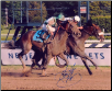 Colonel John 2008 Travers Stakes Photo 8x10 Signed