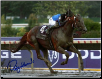 Curlin 2007 BC Classic #1 8x10 Photo Signed