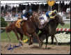Curlin 2007 Preakness Stakes Photo 8x10 Signed