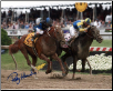 Curlin Preakness Stakes 16 x 20 Signed