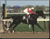 Ruffian 1975 Acorn Stakes 8×10 Signed Photo #2 Jacinto Vasquez