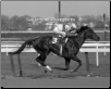 Ruffian 1975 Acorn Stakes 8×10 BW Photo #1 Signed Jacinto Vasquez