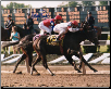 "Sarava 2002 Belmont Stakes 8"" x 10"" Photo Signed"