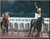 Seattle Slew 1977 Belmont Stakes #419