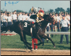 Seattle Slew Kentucky Derby 11x14 Signed