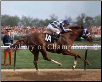 Secretariat #107 1973 Kentucky Derby