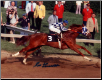 Secretariat 1973 Preakness Stakes 11x14 Signed Photo #114