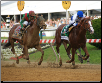 Shackleford 2011 Preakness Stakes
