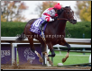 Songbird 2015 Breeders' Cup Juvenile Fillies