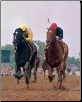 Sunday Silence 1989 Preakness Stakes 11x14 Signed Photo #1