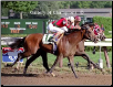 Victory Gallop 1999 Whitney Handicap 229