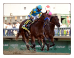 American Pharoah 2015 Kentucky Derby Finish Photo