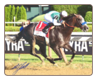 Arrogate 2016 Travers Stakes