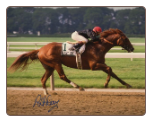 Easy Goer 1989 Belmont Stakes #1 8x10 Signed