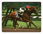 Easy Goer Travers Stakes #1 8x10 Signed #528