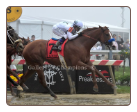 Justify 2018 Preakness Stakes