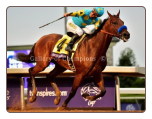 American Pharoah 2015 Breeders Cup Classic Finish Photo