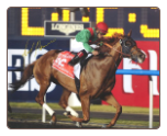 Animal Kingdom 2013 Dubai World Cup Signed