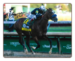 Authentic 2020 Kentucky Derby finish Photo Signed