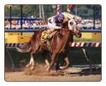 Tabasco Cat 1994 Preakness Stakes 8x10 Signed